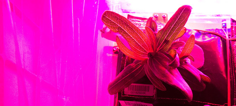 How Mold on Space Station Flowers is Helping Get Us to Mars | Plant Biology Teaching Resources (Higher Education) | Scoop.it