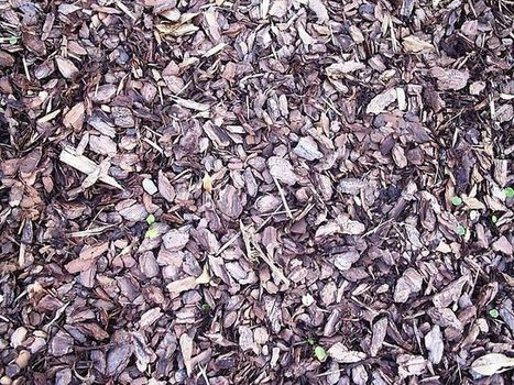 Mulching and ground cover crops - Water Retention - Part 2 of 6 | Think Like a Permaculturist | Scoop.it