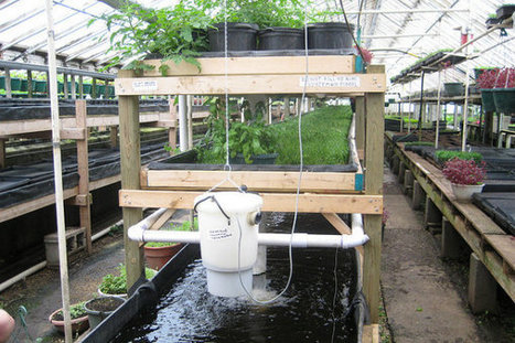 Aquaponics Farm Turns Waste to Resources - Earth911.com | Vertical Farm - Food Factory | Scoop.it
