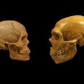 Neanderthal viruses found in modern humans | Heritage Daily | Kiosque du monde : A la une | Scoop.it