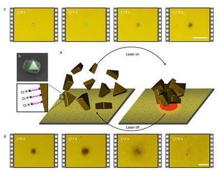 Plasmon-enhanced thermophoresis for the reversible assembly of plasmonic nanoparticles | Amazing Science | Scoop.it