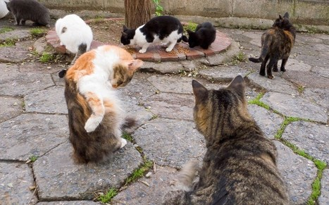 Warning to tourists in France after attack by feral cats - Telegraph | Feral Cats | Scoop.it