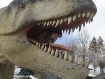 Hey, cat, what are you doing in T-Rex jaws? | Funny and crazy cats | Scoop.it