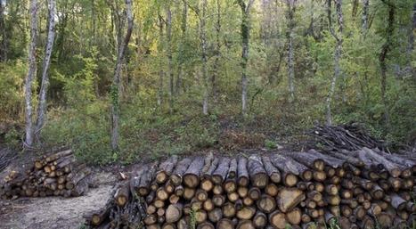 Stratégie à l'exportation pour la filière forêt-bois: Stéphane Le Foll maintient le cap | Alim'agri | anoribois | Scoop.it