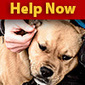 Dogs Rescued From Fighting Ring - Help Now | End dog fighting! | Scoop.it