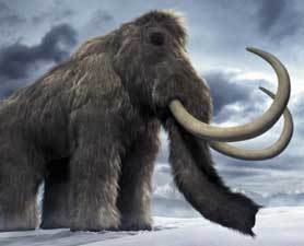 Russian Boy Finds Wooly Mammoth : Discovery News | ub3r newz | Scoop.it