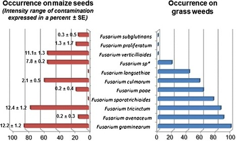 Withdrawal of maize protection by herbicides and insecticides increases mycotoxins contamination near maximum thresholds | plant cell genetics | Scoop.it