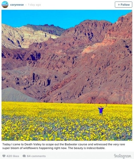 Rare superbloom in California's Death valley | EarthSky.org | Sustainable Futures | Scoop.it