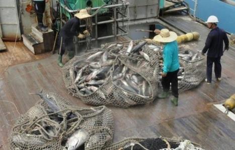 Pêche : 31,4% des stocks de poissons dans le monde sont surexploités | Dr. Goulu | Scoop.it