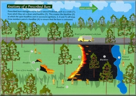 In Texas, Using Fire to Protect and Expand Water Supplies   Trinity River Basin   Scoop.it