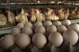 Une nouvelle stratégie pour le bien-être des animaux – A new ... | Union Européenne, une construction dans la tourmente | Scoop.it