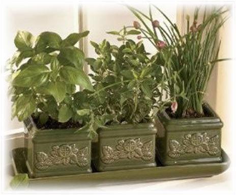 windowsill herb garden | Gardening is more than Digging the Dirt | Scoop.it