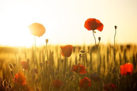 Appliquez-vous à retrouver votre optimisme - Métamorphose | Soyons confiants | Scoop.it
