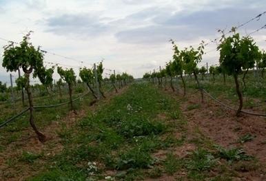 Extremadura tiene 3.265 productores de agricultura ecológica pero   Agricultura ecológica y tintes naturales   Scoop.it