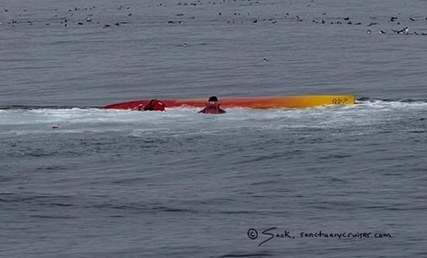 Humpback whale breaches on top of kayakers in Moss Landing | The Blog's Revue by OlivierSC | Scoop.it