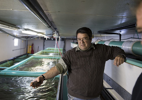 N.L. college converting waves into power using 'a 14-ft.-tall bicycle pump' to grow fish on land | Aquaculture Directory | Scoop.it