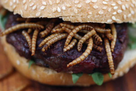 BBQ mealworms and pigeon burgers on menu in UK | Food | Scoop.it