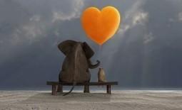 Rakkaudella johtaminen pesee pirulliset kollegat | Parempi maailma | Scoop.it