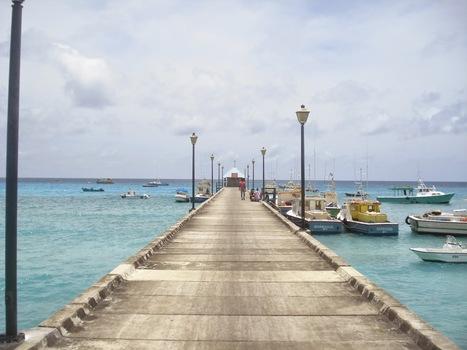Making it Paradise...bits of Bajan life: It's Turtle Time!   Caribbean Travel Source   Scoop.it