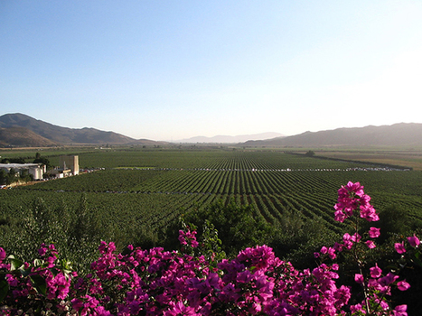 The Secret of Valle de Guadalupe's Wine (R)evolution | Baja California | Scoop.it