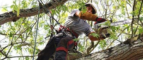 Léauté Paysage - Élagage, Abattage, Soins des arbres | LEAUTE Paysage, Créateur de Parc et Jardin | Scoop.it