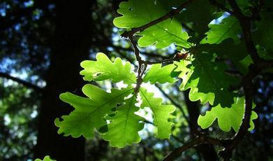 De l'électricité dans les plantes | zegreenweb | Innovations - Energies vertes | Scoop.it
