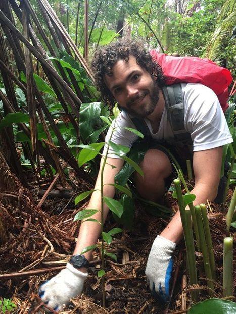 Big Island Now: Volunteers Sought for Save the Rainforest Program   ❀ hawaiibuzz ❀   Scoop.it