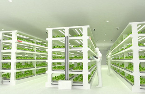 Toshiba's new plant factory to bring perfect veggies to Japan | Vertical Farm - Food Factory | Scoop.it