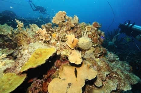 Scientists Discover New Threats to Corals | Filmbelize | Scoop.it