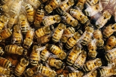 Las abejas de la miel también tienen personalidad | Reflejos | Scoop.it