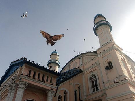 Mosque in Kabul (by Maria) | Afghan Women in Media | Scoop.it