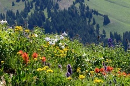 Yale Environment 360: Wildflower Season in Rockies Is 35 Days Longer as Climate Warms   Sustainable Futures   Scoop.it