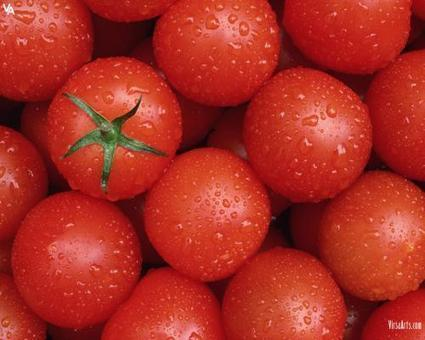 Tomato | High Resolution Wallpapers | Scoop.it