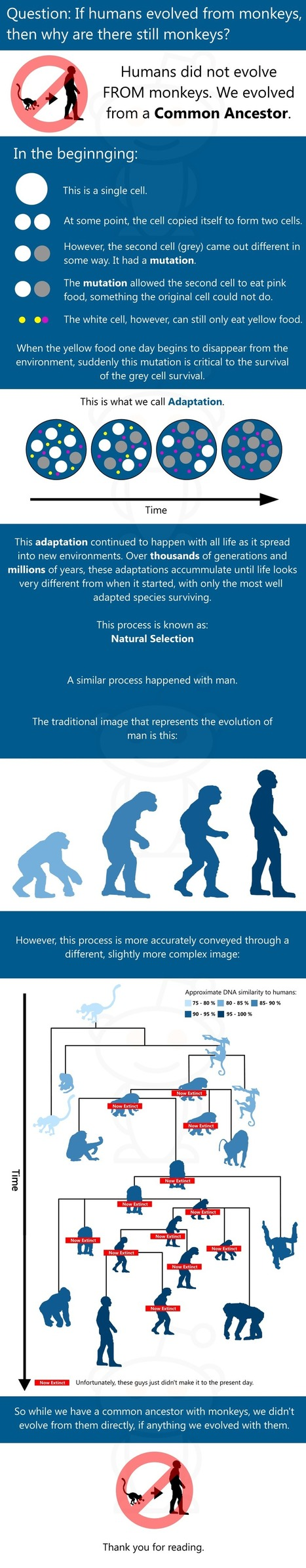 Did Humans Evolved From Monkeys?   Bio Means Life   Scoop.it