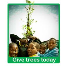 Greenpop - Planting trees, changing lives = Social Enterprise | cape town | Scoop.it