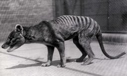 Why don't we grieve for extinct species? | Existential Risk | Scoop.it