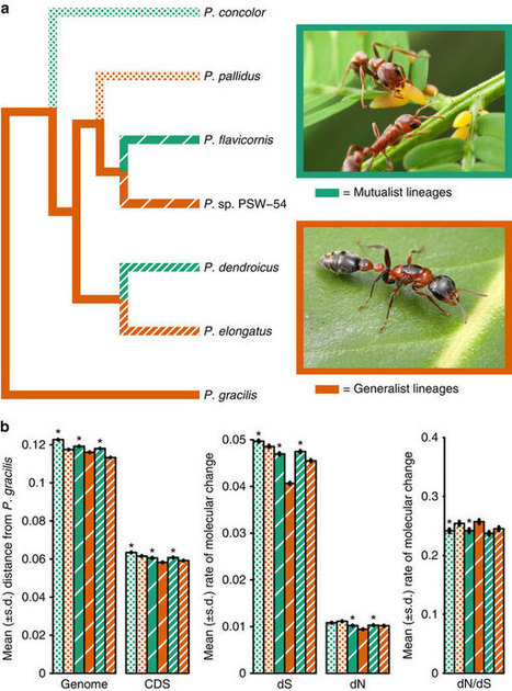 Comparative genomics reveals convergent rates of evolution in ant-plant mutualisms   MycorWeb Plant-Microbe Interactions   Scoop.it