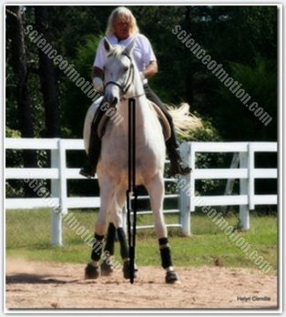 How to see and ride a correct half pass or shoulder in | Horse and Rider Awareness | Scoop.it