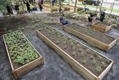 Urban farm at Colorado Convention Center bears first fresh bounty - Denver Post | Vertical Farm - Food Factory | Scoop.it