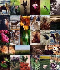 Flora y Fauna | Ecología | Scoop.it