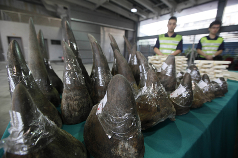 Petition Seeks Ban on Trade in Fake Rhino Horn   Oceans and Wildlife   Scoop.it