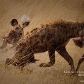 Safarious Gallery - Cameras for Conservation 2013 Winners | safarious | Scoop.it