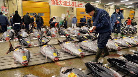 Radiation level in tuna off Oregon coast tripled after Fukushima disaster | Upsetment | Scoop.it