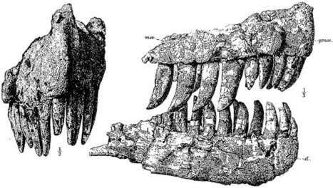 What is Genyodectes? | Paleontology News | Scoop.it