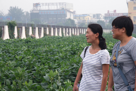 A Look Inside China's GMO Research Enterprise | MIT Technology Review | Science, Technology, and Current Futurism | Scoop.it