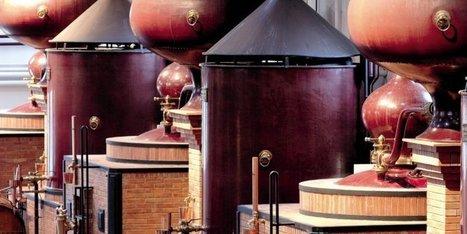 Environ 8,5 millions d'hectolitres de vin blanc produits cette année vont brûler dans les alambics charentais | Le Vin et + encore | Scoop.it