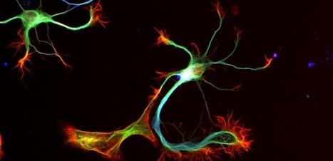 Cerveau : comment se forment nos souvenirs - Sciencesetavenir.fr - Sciences et Avenir | corcelia1 | Scoop.it