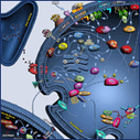 Nitric Oxide Biology | Molecular pathways underpinning oxidative stress | Scoop.it