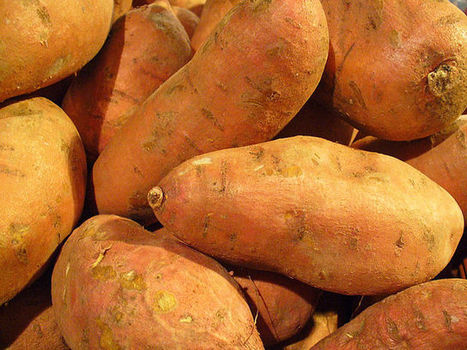 #383 Kansas City's Sweet Potato Project | This gives me hope | Sustainability and Community Resiliance | Scoop.it