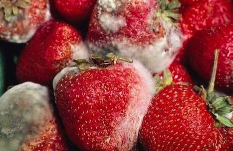 El moho en los alimentos y riesgo para la salud | Apasionadas por la salud y lo natural | Scoop.it